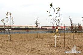 Благоустройство. Посажены деревья